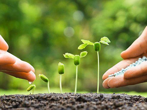Pflanzennährstoffe